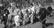 Liberación de presos políticos del 1Dmx